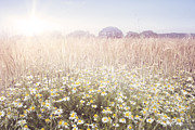 Snug Digital Art Prints - Sunshine over the Fields Print by Natalie Kinnear