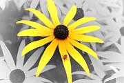 Cathy  Beharriell - Sunshine Susie