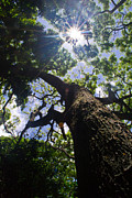 Matt Radcliffe Prints - Sunshine through the trees Print by Matt Radcliffe