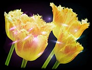 Flower Paintings - Sunshine Tulips by Debra  Miller