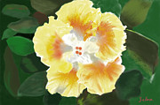 Zelma Hensel Prints - Sunshine Print by Zelma Hensel