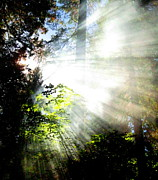 Sun Rays Painting Prints - Sunstream Print by Shasta Eone