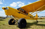 Piper Cub Prints - Super Cub Print by Matt Abrams