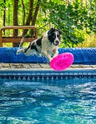 Swimming Dog Prints - Super Dog 2 Print by Steve Harrington