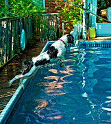 Swimming Dog Prints - Super Dog Print by Steve Harrington