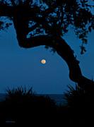 Michelle Wiarda - Super Moon Over the Atlantic