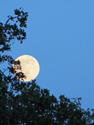 Austin At Night Prints - Super moon rising Print by Patricia Kertson