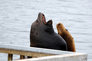 Honk Prints - Supersized Sea Lion and Friend Print by Susan Wiedmann