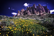 Bees Posters - Superstition Mountain at Spring Time Poster by Sean Foster