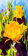 Close Up Floral Painting Prints - Supreme Sultan Iris Print by Janis Grau