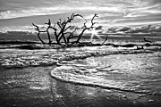 Sepia White Nature Landscapes Posters - Surf at Driftwood Beach Poster by Debra and Dave Vanderlaan