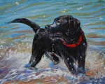 Labrador Black Labrador Posters - Surf Pup Poster by Molly Poole