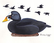 James Lewis Prints - Surf Scoter Decoy  Print by James Lewis
