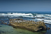 Randall Nyhof - Surf Waves at La Jolla California with Gulls perched on a Large Rock No. 0194