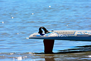 Surf Lifestyle Originals - Surfboard in the water by Tommy Hammarsten