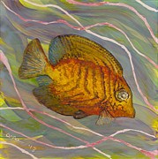 Colorful Tropical Fish Glass Art Metal Prints - Surgeonfish Metal Print by Anna Skaradzinska