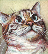 Watercolor Portrait. Prints - Surprised Kitty Print by Olga Shvartsur