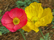 Flowers Of Paradise - Surprised Poppies by Ben and Raisa Gertsberg