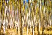 Green Color Art - Surreal Aspen Tree Abstract by James Bo Insogna