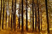 Kim Hojnacki - Surreal Autumn