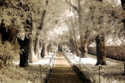 Blue Grey Infrared Art Prints Framed Prints - Surreal Dreamy Infrared Sepia - Hopeland Gardens Park South Carolina Pathway Nature Landscape  Framed Print by Kathy Fornal