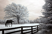 Horse Art Prints Prints - Surreal Dreamy Infrared Trees - Fantasy Infrared Horse Nature Landscape With Fence Post Print by Kathy Fornal