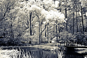 South Carolina Infrared Landscape Posters - Surreal Dreamy Infrared Trees Nature Landscape Poster by Kathy Fornal