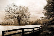 Infrared Nature Art Prints Photos - Surreal Dreamy Infrared Trees Nature Sepia Ethereal Landscape With Fence by Kathy Fornal