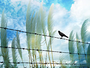 Gothic Trees Prints - Surreal Dreamy Raven Sitting On Fence Blue Sky Print by Kathy Fornal