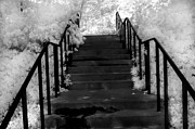 Infrared Art Prints Prints - Surreal Fantasy Black and White Stairs Nature  Print by Kathy Fornal