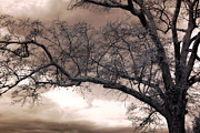 Dreamy Sepia Nature Photos Posters - Surreal Fantasy Gothic South Carolina Oak Trees Poster by Kathy Fornal