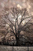 Tree Art Prints - Surreal Fantasy Gothic South Carolina Sepia Oak Trees and Fantasy Bokeh Circles Print by Kathy Fornal