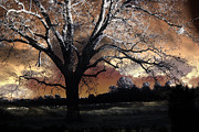 Surreal Fantasy Trees Landscape Prints - Surreal Fantasy Gothic Trees Nature Sunset Print by Kathy Fornal