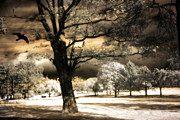 Dark Sepia Posters - Surreal Fantasy Infrared Trees Raven Landscape  Poster by Kathy Fornal