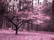 Dark Pink Photos - Surreal Fantasy Pink Trees Nature Landscape by Kathy Fornal