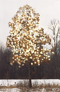 Beautiful Tree Photos - Surreal Fantasy Tree Nature Sparkling Lights by Kathy Fornal