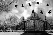 Gothic Crows Prints - Surreal Gothic Black and White Gate With Flying Ravens  Print by Kathy Fornal