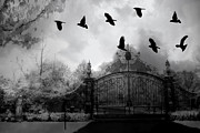 Ravens And Crows Photography Photos - Surreal Gothic Black and White Gate With Ravens by Kathy Fornal