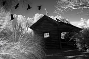 Ravens Posters - Surreal Gothic Black and White Infrared Nature Haunting Old House With Flying Ravens Poster by Kathy Fornal