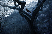 Crows Framed Prints Prints - Surreal Gothic Crow Haunting Tree Limbs Print by Kathy Fornal