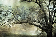 Fantasy Dreamy Oak Trees Posters - Surreal Gothic Dreamy Trees Nature Landscape Poster by Kathy Fornal