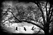 Fantasy Dreamy Oak Trees Posters - Surreal Gothic Fantasy Tree Nature Landscape - Haunting Surreal Trees With Flying Ravens  Poster by Kathy Fornal