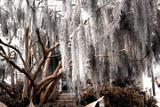 Savannah Fine Art Photography. Savannah Old Trees Prints - Surreal Gothic Savannah House Spanish Moss Hanging Trees Print by Kathy Fornal