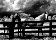 Surreal Art Photo Prints - Surreal Horses Stormy Black And White Infrared Horse Landscape Print by Kathy Fornal