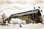 Surreal Infrared Sepia Nature Prints - Surreal Infrared Sepia Vintage Crumbling Barn With Flying Ravens - The Passage of Time Print by Kathy Fornal
