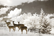 Winter Prints Posters - Surreal Nature Deer Winter Snow Landscape Poster by Kathy Fornal
