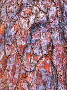 Strong Vertical Images Prints - Surreal Patterned Bark Print by Gill Billington