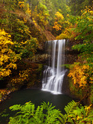 Scenic Landscapes Prints - Surrounded By Fall Print by Darren  White