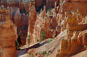 Tags Photos - Survival of the Trees in Bryce Canyon by Bruce Gourley