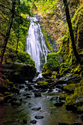 Umpqua River Prints - Susan Creek Falls Print by Loree Johnson